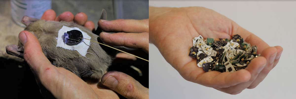 434 MHz Tracking Devices that Attach to Wild Bats